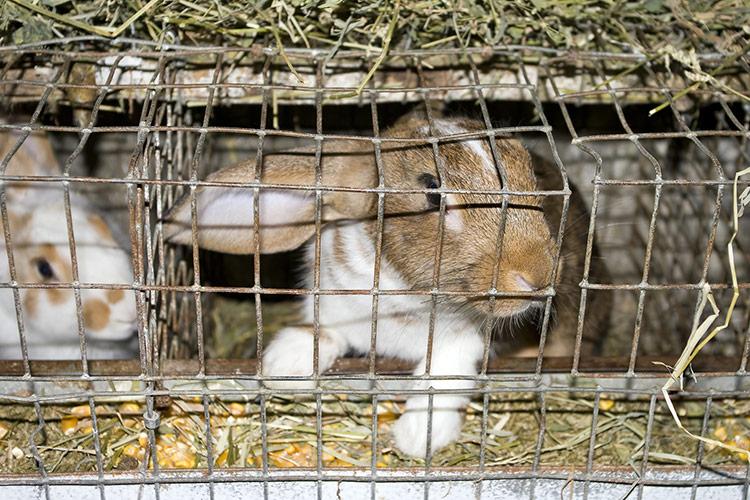 Кролиководческая ферма
